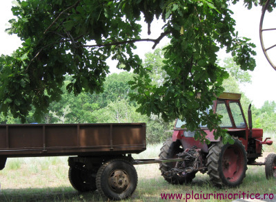 tractorbun